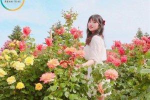 Lễ hội hoa tại công viên hoa hồng lớn nhất ở Việt Nam