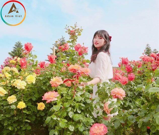 Lễ hội hoa hồng lớn nhất Việt Nam